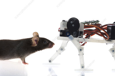 Mouse robot