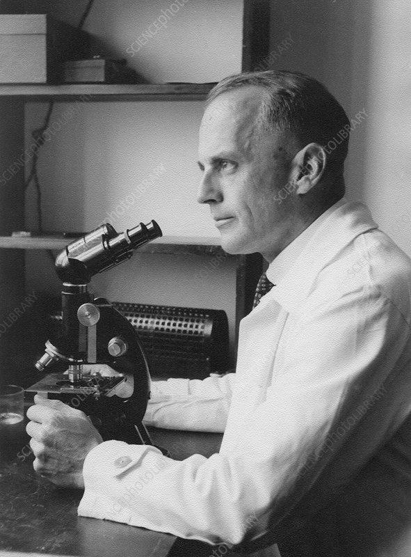 Hans Bauer, German geneticist