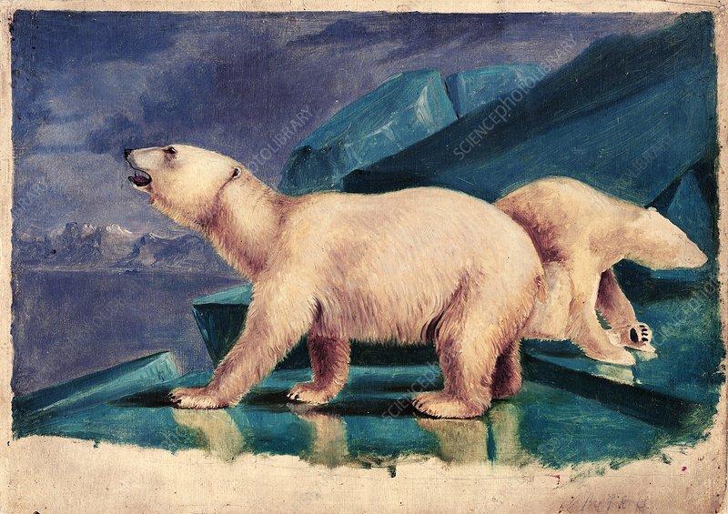 Polar bears, 19th century