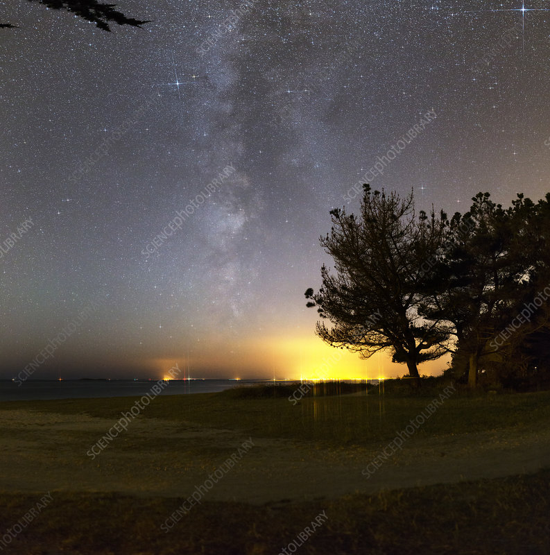 Milky Way over coastal trees