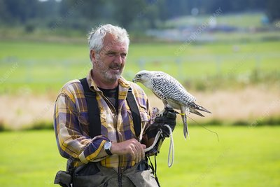 A falconry display