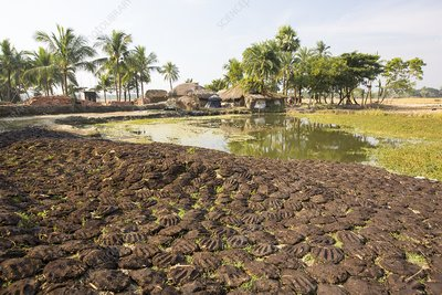 Cow dung belonging to subsistence farmers