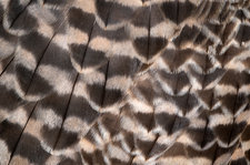 Saker falcon wing feathers abstract