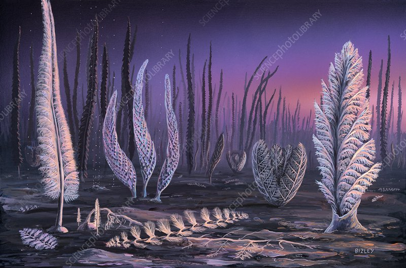 Pre-Cambrian life forms, illustration