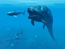 Dunkleosteus hunting primitive sharks