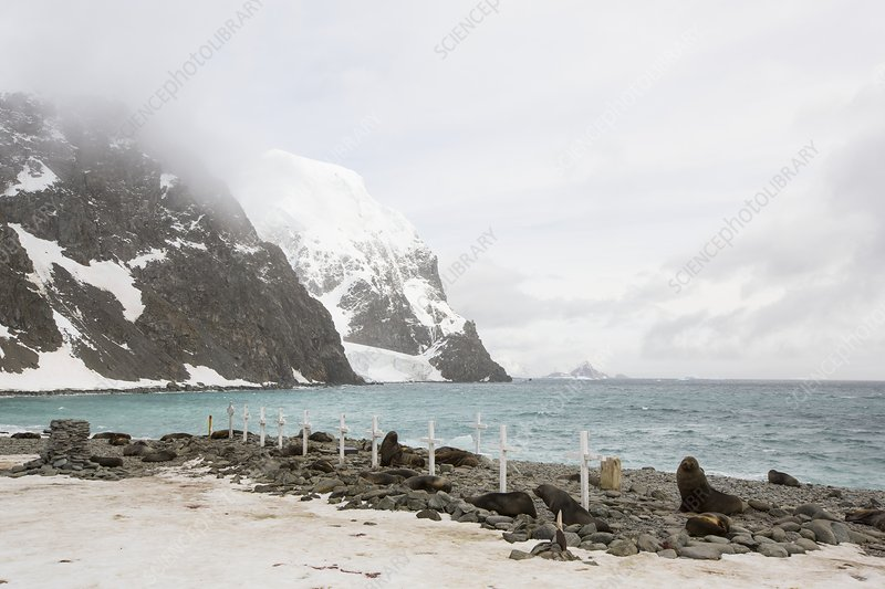 Graves and Antarctic Fur Seals