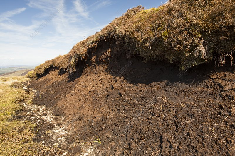 Peat Hags on king bank head