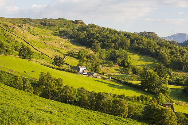 A hill farm above Borrowdale