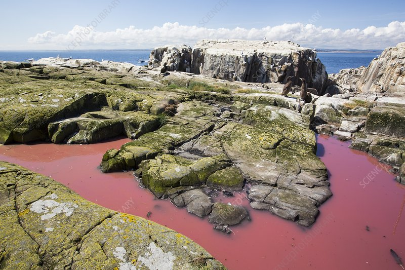 A pool coloured red from algae