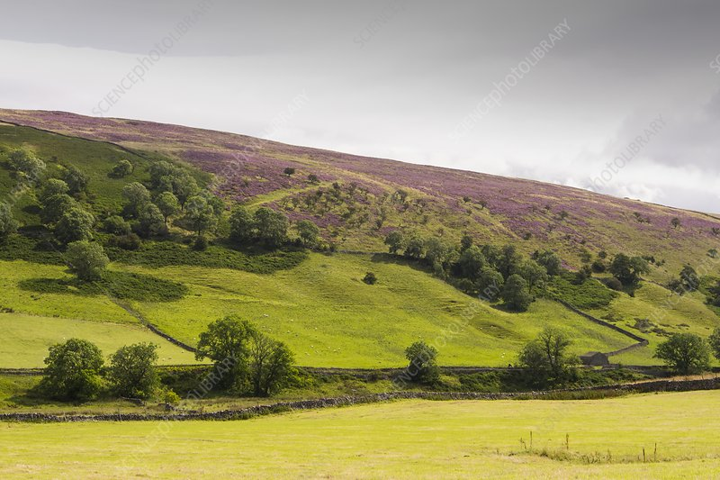 Littondale in the Yorkshire Dales