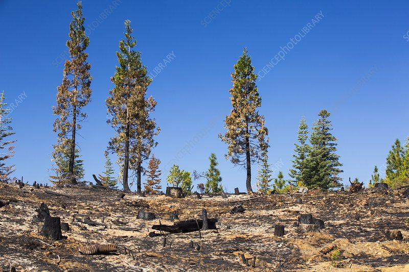 The King Fire, California, USA