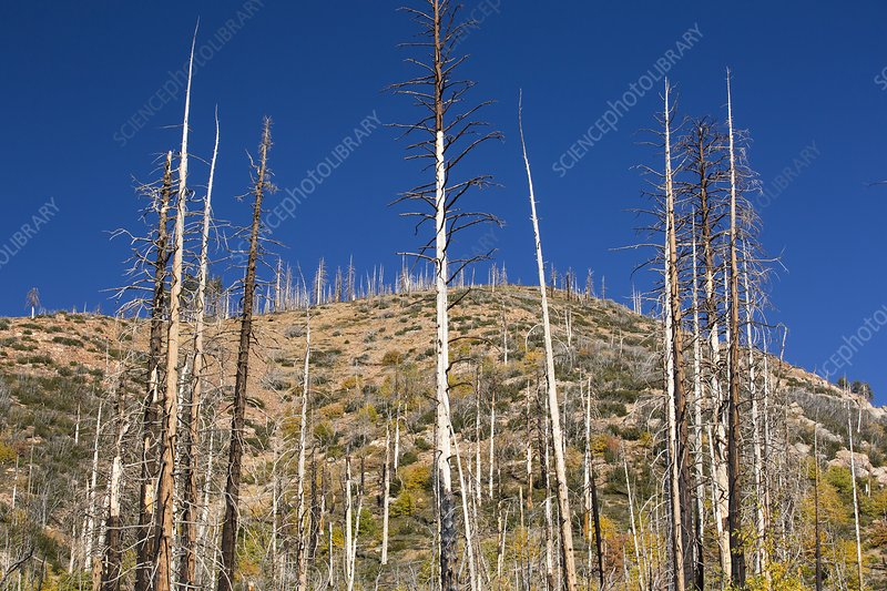 Forest destroyed by wild fires