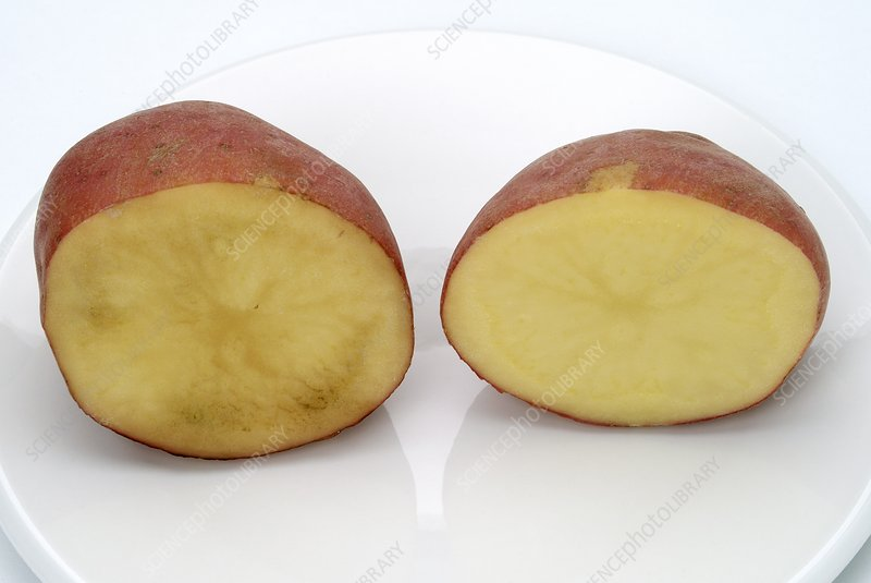 Cut potato exposed to air