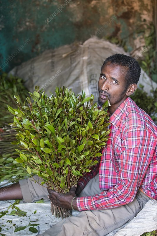 Man selling khat at a market near Harer