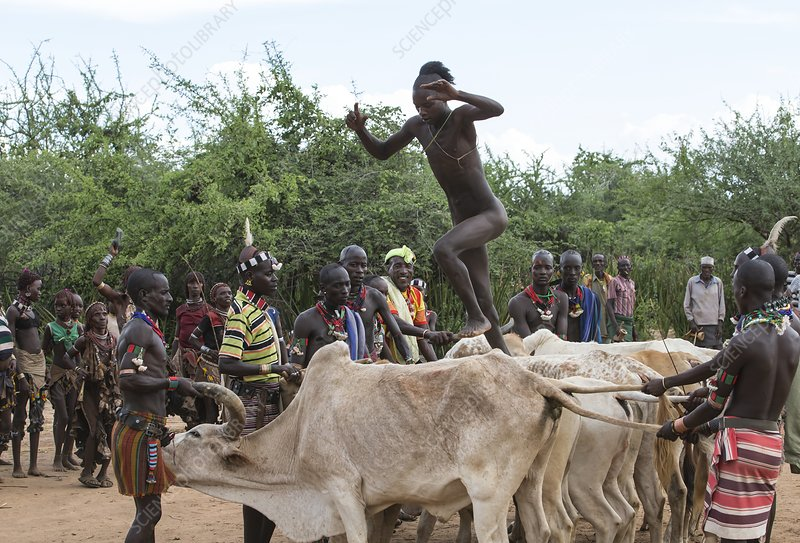 Young man jumping the bulls, Ethiopia