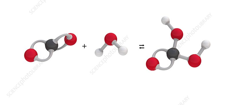 Formation of carbonic acid