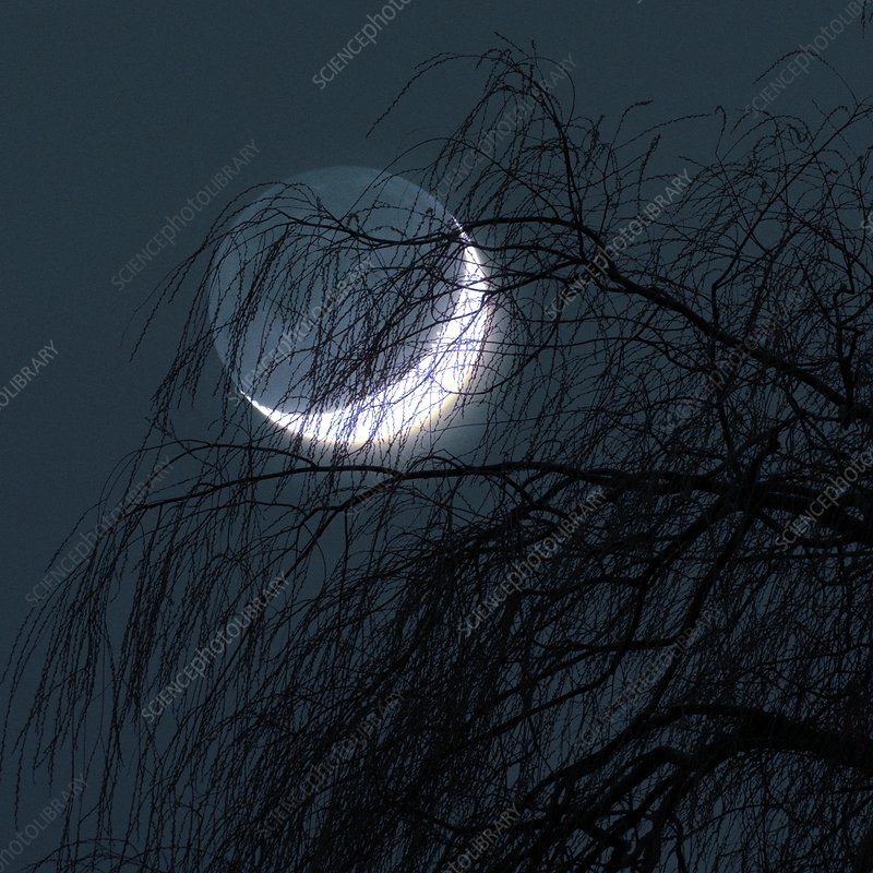 Crescent moon behind a tree