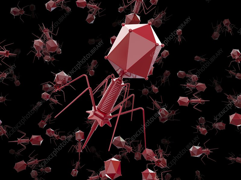 Bacteriophage T4 viruses, illustration