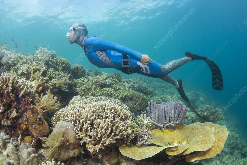 Free diver swimming over coral reef