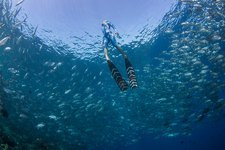Free diver in school of fish