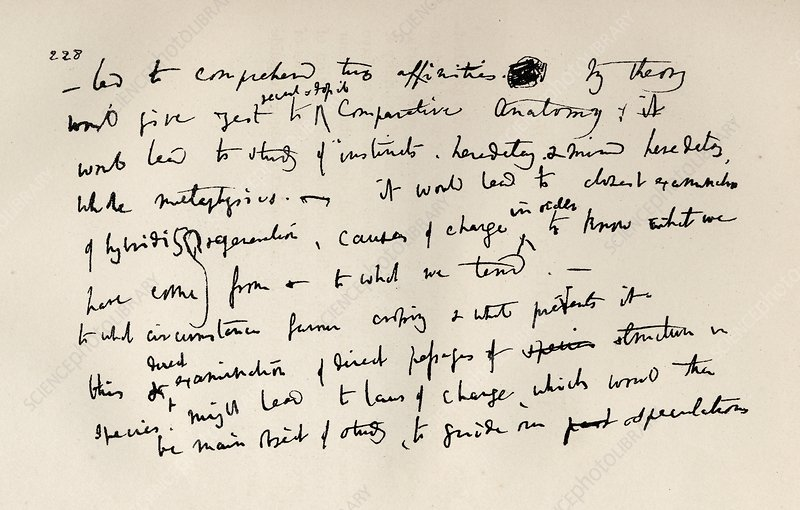 Page Of A Notebook Of Charles Darwin