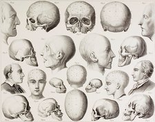 Phrenological Illustration