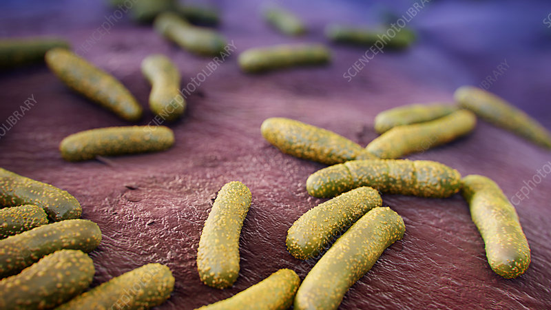 Skin bacteria, illustration