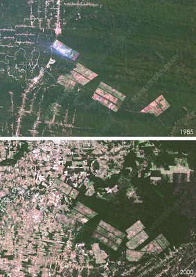 Matto Grosso deforestation, 1985 and 2000