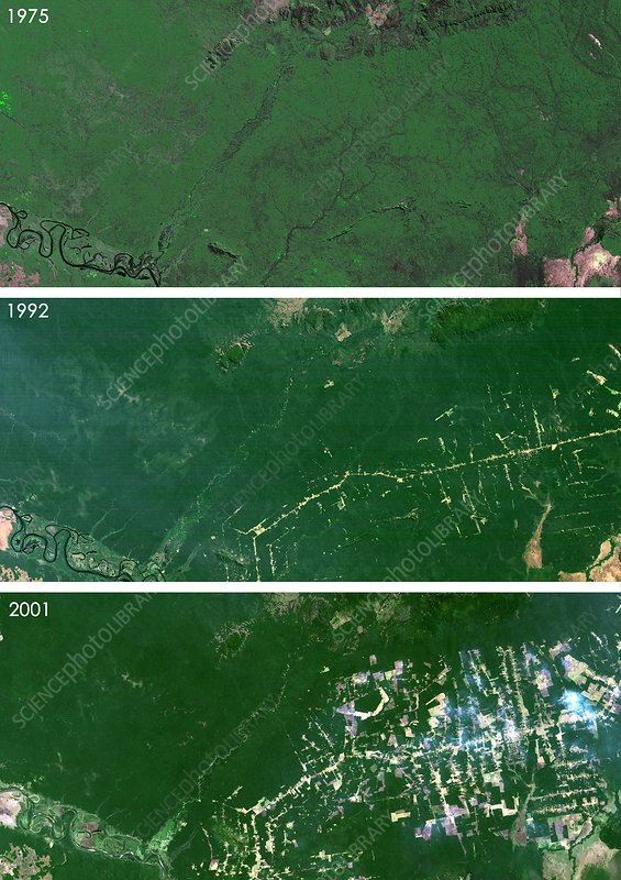 West Rondonia, Brazil, deforestation