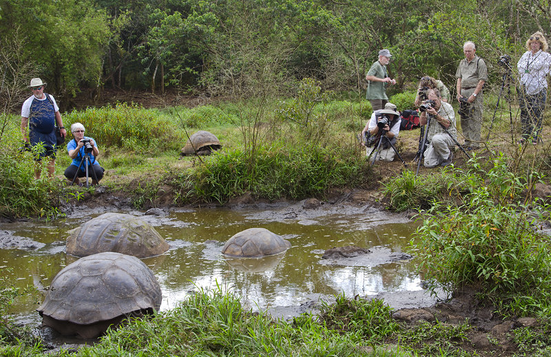 Tourist Photographing Giant Tortoises