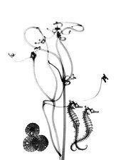 Plant tendrils and seahorses, X-ray