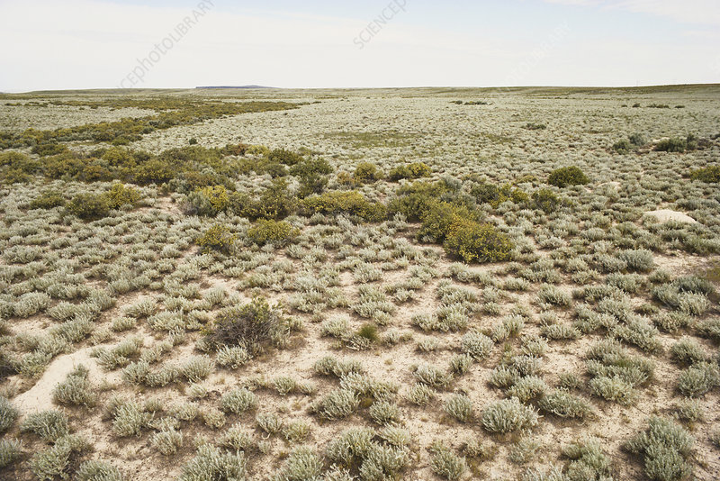 Desert Shrub Steppe, Idaho