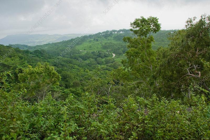 Mount Manucoco, East Timor