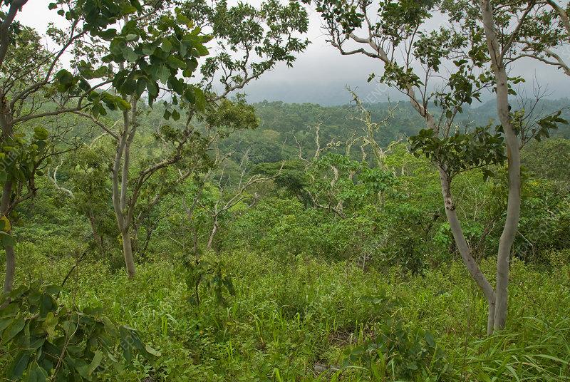 Mount Manucoco, Timor-Leste