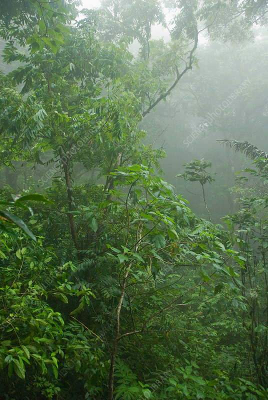 Rainforest on Mount Manucco