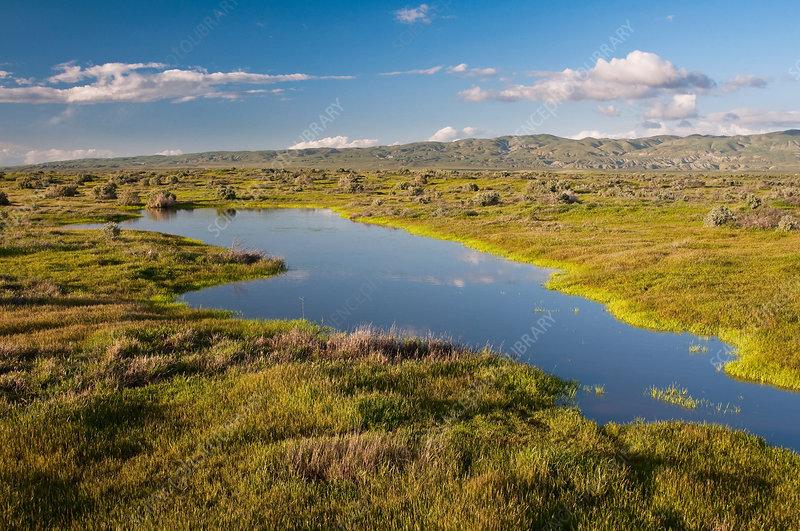 Vernal Pool, California