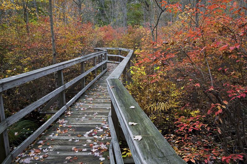 Boardwalk in the Great Swamp