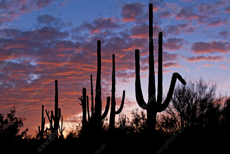 Sunset over Sonoran Desert