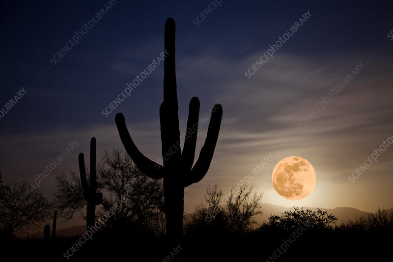 Super Moon over Sonoran Desert