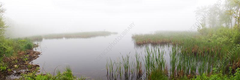 Hart Pond and Beaver Dam, CT