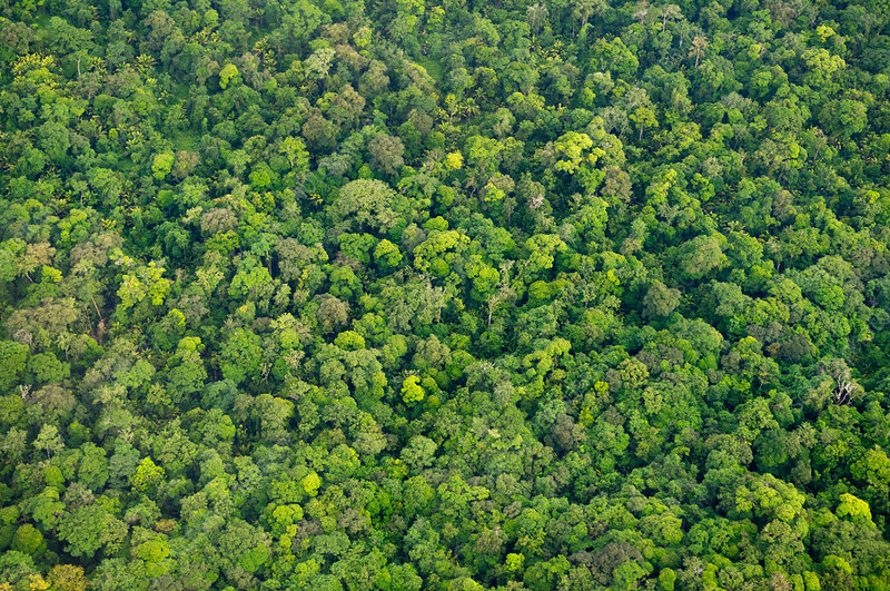 Rainforest aerial