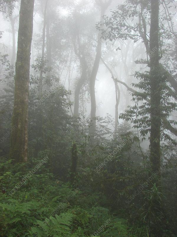Rainforest on Mt. Kilimanjaro