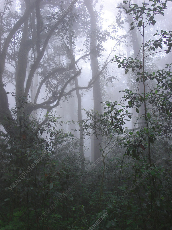 Rainforest on Mt. Kilimanjaro