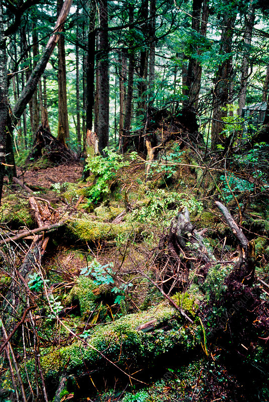 Temperate Rain Forest, Washington State