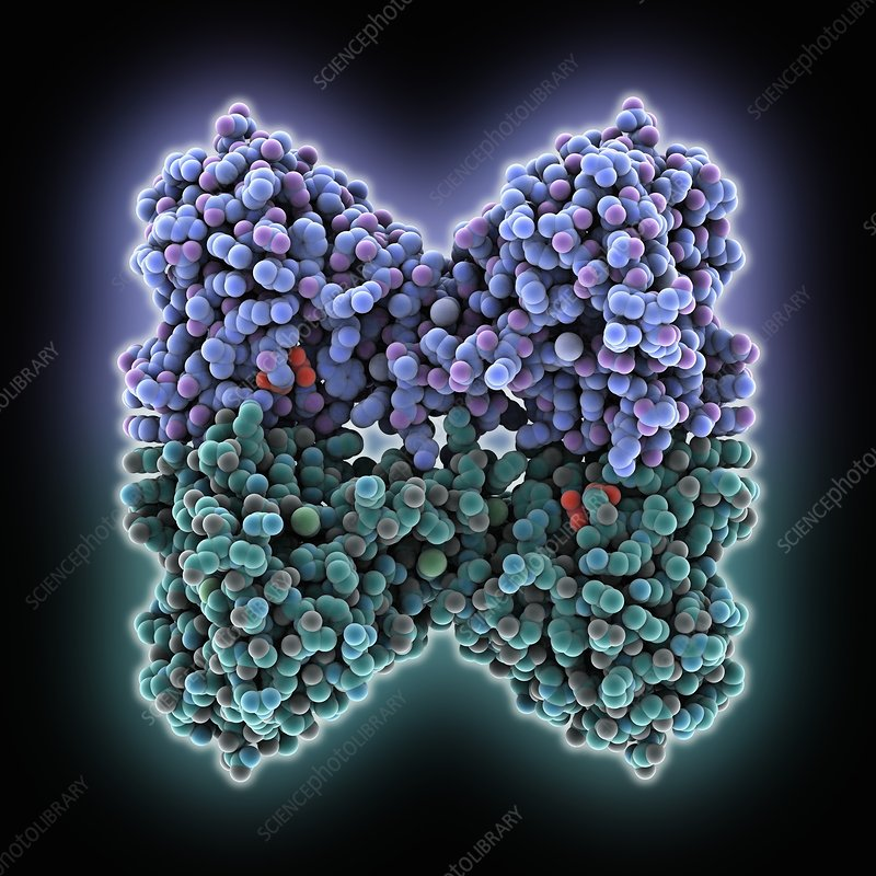 Glutathione peroxidase enzyme molecule
