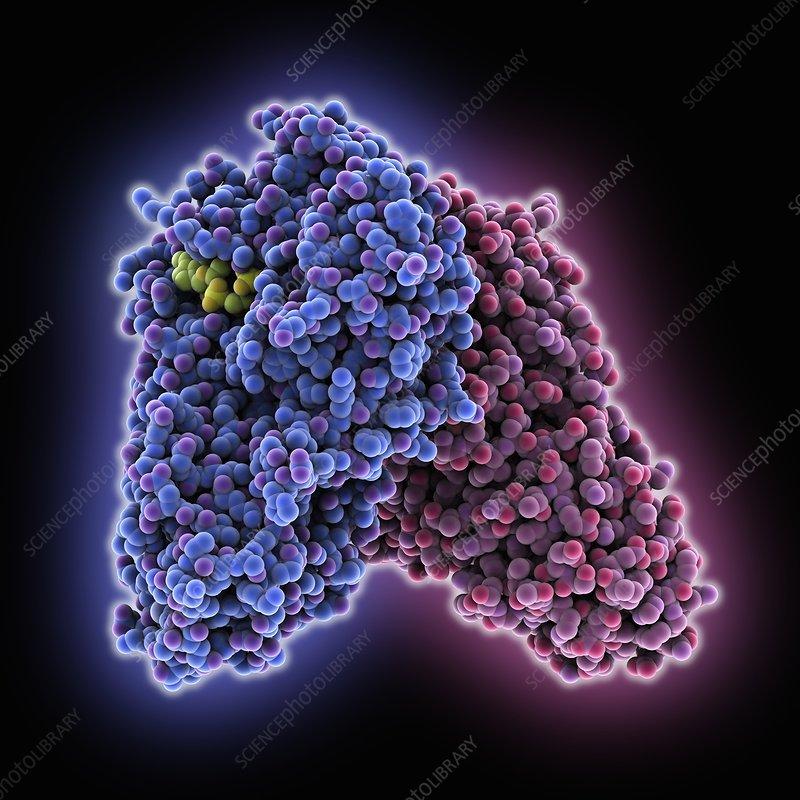 Diphtheria toxin, molecular model