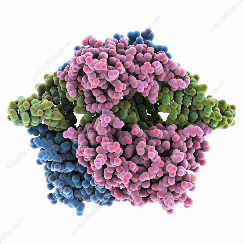 Double-stranded RNA-ribonuclease III