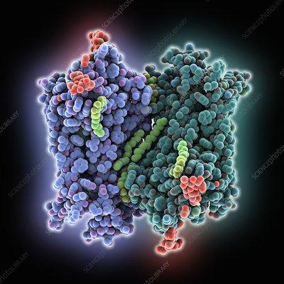 Rhodopsin molecule