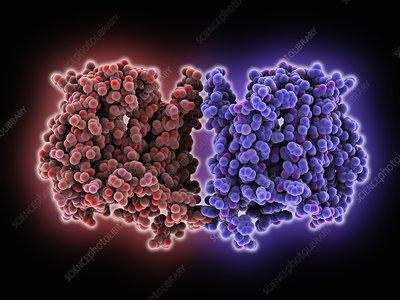 Multidrug transporter molecule