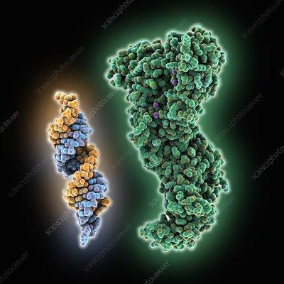 RNA interference molecules